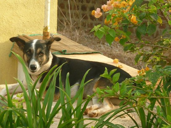The Banyan Soul : Owner's pet dog who came to say hi