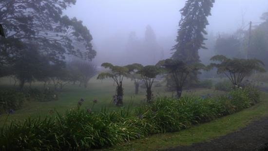Halana Hale: misty view from the lodge
