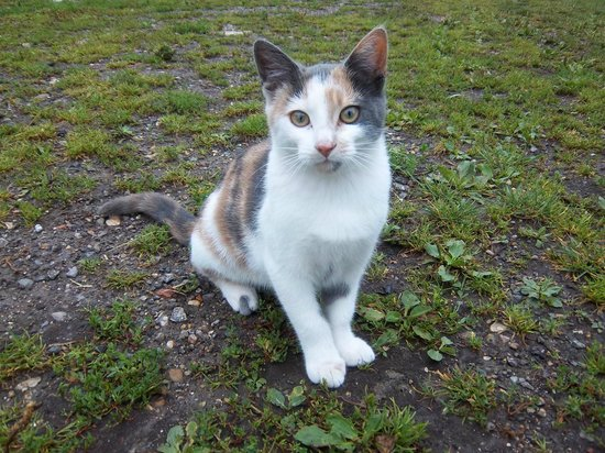 Great Broxhall Farm Bed and Breakfast: Mini, our VERY friendly feral farm cat who has tamed herself! She is a real character!