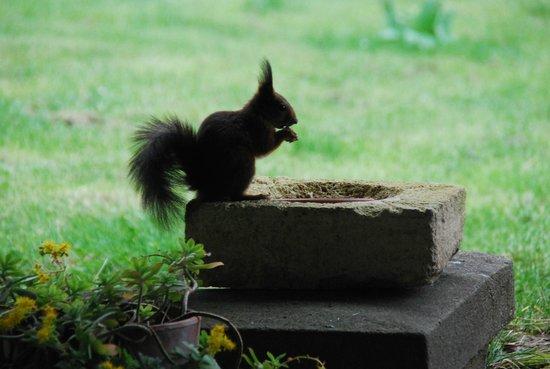Domaine Mongiron: Squirrel