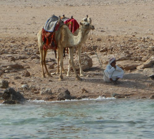 Sea Gardens: Camel guy on beach (sits just outside boundary of private beach).