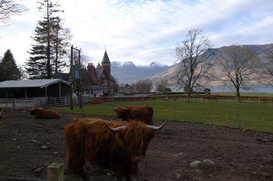 The Torridon Inn : A view from the grounds