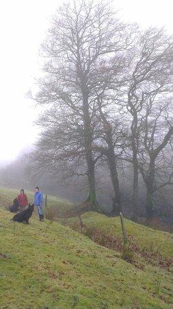 Twitchen Farm: walking on Twitchen's land