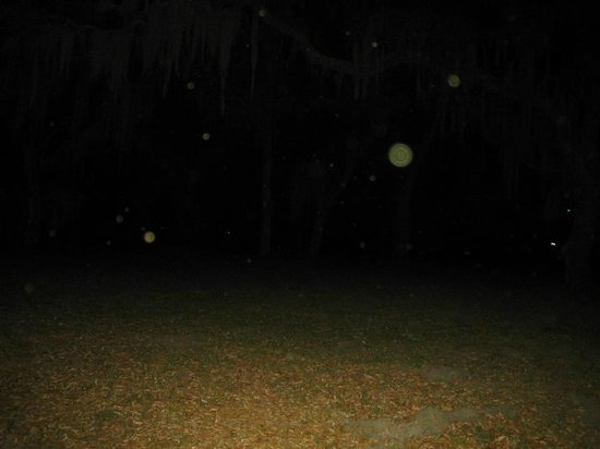 Ghost Walk of Saint Simons : Lots of orbs in the Indian burial grounds