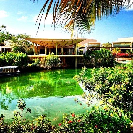Rosewood Mayakoba: View from Lagoon Lawn