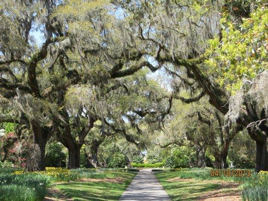 Path To The Zoo Fotograf A De Brookgreen Gardens