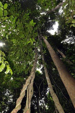 Gaya Island Resort: Jungle trek