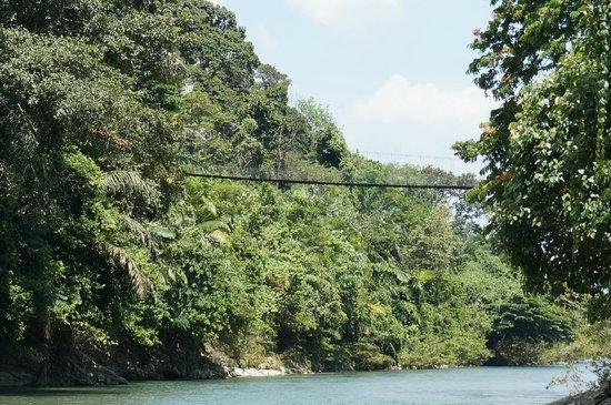 Mega Inn - Tangkahan: The bridge across the river