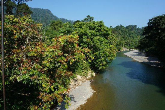 Mega Inn - Tangkahan: View from the bridge