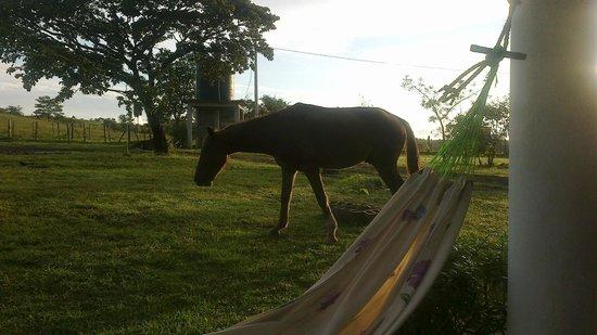 Sherlley Cabins: el caballo matutino , se le puede dar de comer desde tu mano