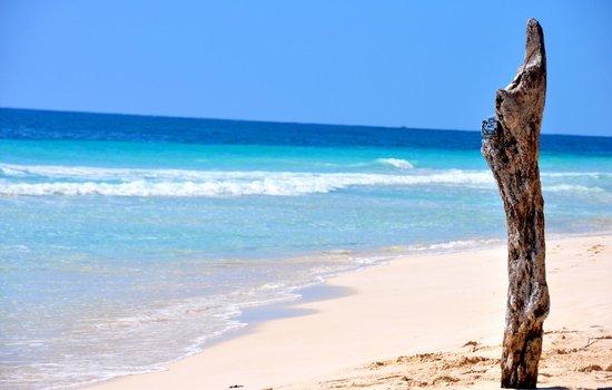 Casa de las Olas: Olas Beach