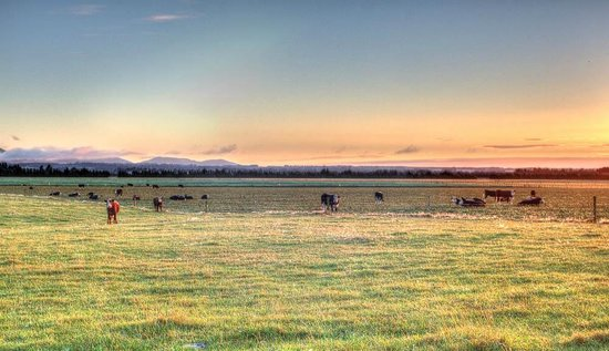 Glenview Farmstay: Sunrise - what could be more perfect?