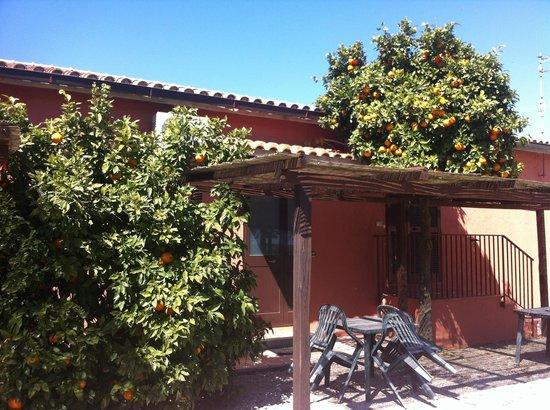 Agriturismo Fusini: Le arance selvatiche del Fusino