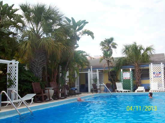 Amber Tides Motel: The pool and trees