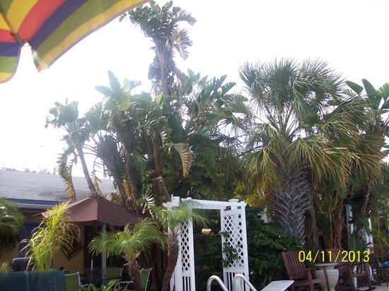 Amber Tides Motel: Palm trees around pool.