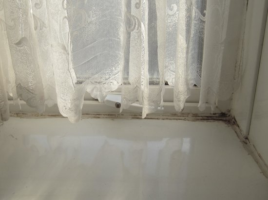 Oscar Lodge: Mould on window and on net in bathroom