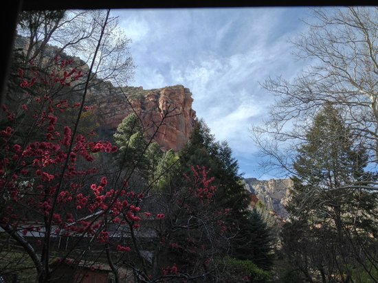 The Canyon Wren - Cabins for Two: View out the bedroom balcony.  Amazing blossoms.