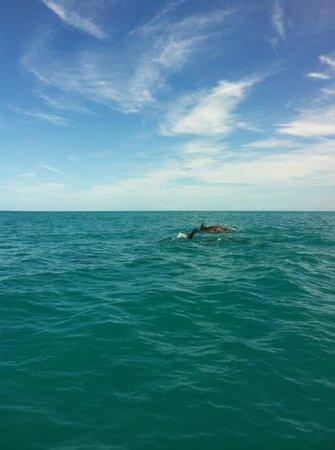 Explora Holbox Kayak Tours: Delfines
