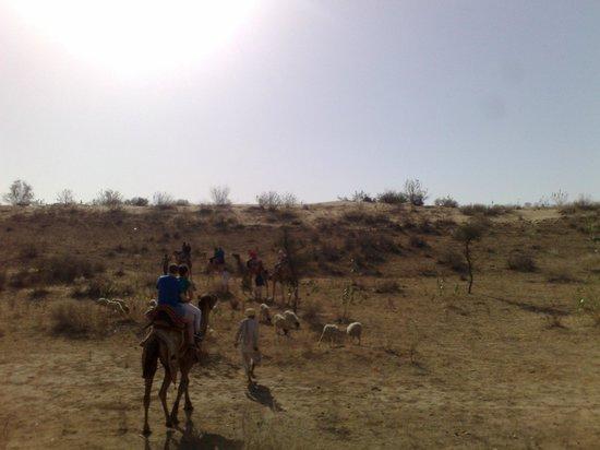 Tent camp camel ride bild von samsara luxury resort and camp dechu
