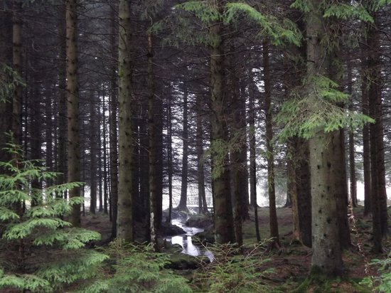Dumfries and Galloway, UK: Woodland Views