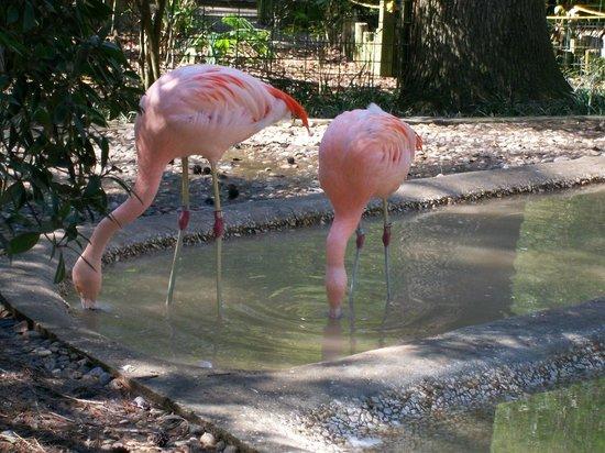 Ellen Trout Zoo: Not Flamingos.