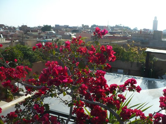 Riad Les Trois Palmiers El Bacha: View from the roof