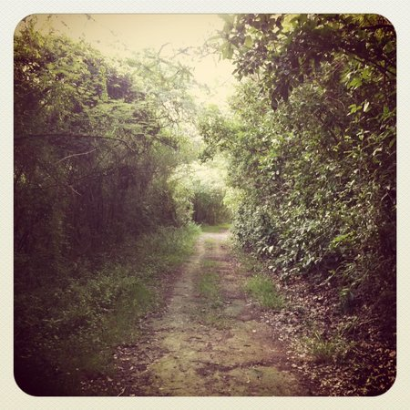 360 Vieques: Island road