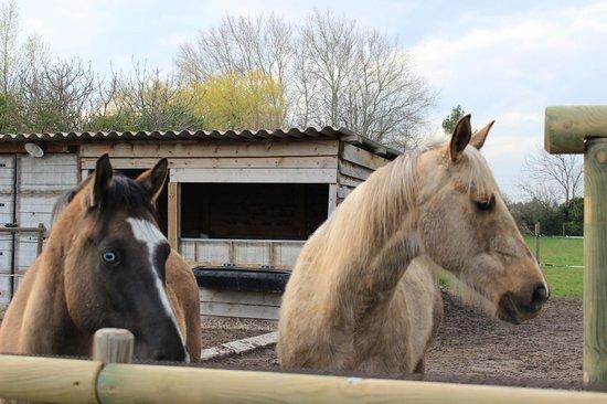 Le Mas Des Arômes: Les chevaux
