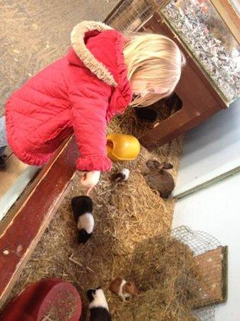 Animalarium at Borth: bunny