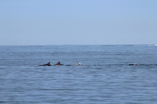 Ingenia Holidays Broulee: The dolphins coming into Shark Bay!