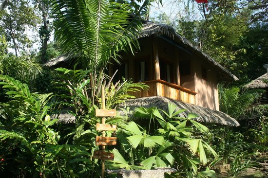 Copa de Arbol Beach and Rainforest Resort: Cabina