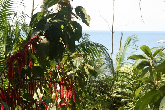 Copa de Arbol Beach and Rainforest Resort: Drake Bay