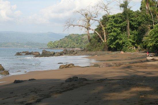 Copa de Arbol Beach and Rainforest Resort: Beach