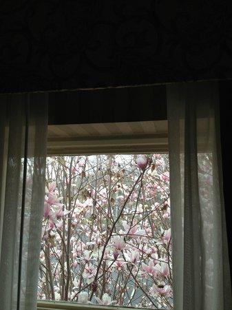 Breckinridge Inn: Blooming magnolia tree