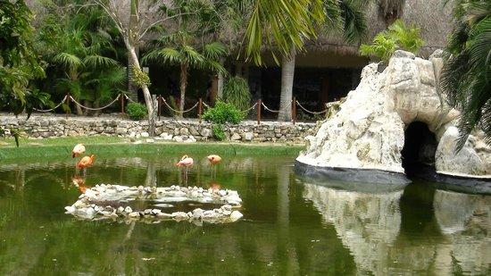 The Royal Suites Yucatan by Palladium: Bassin de flamants roses