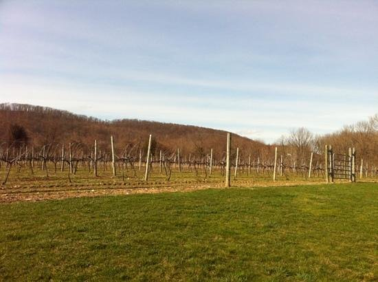 Hamburg, NJ: vineyard