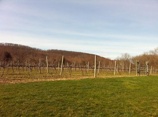 Αμβούργο, Νιού Τζέρσεϊ: vineyard