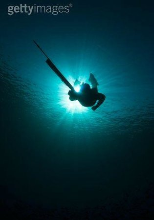 New Zealand Diving Image