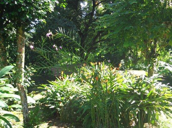 Pousada Casa Grande: Jardim
