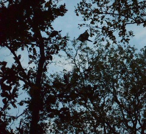 flying squirrel at Kanha jungle lodge