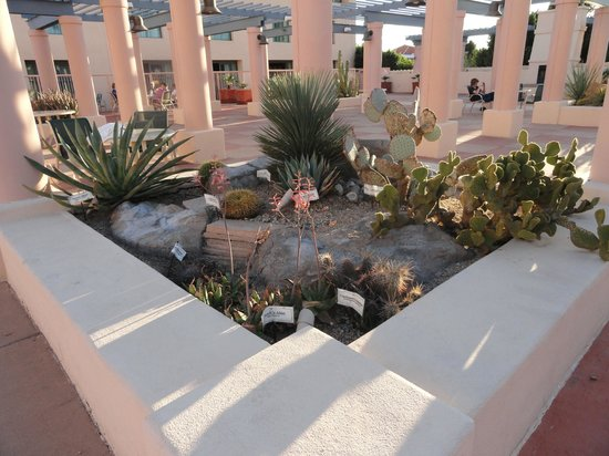 Tempe Mission Palms Hotel and Conference Center: Patio area on roof, near the pool.