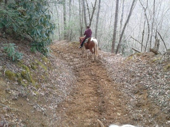 Smoky Mountain Riding Stables : trails