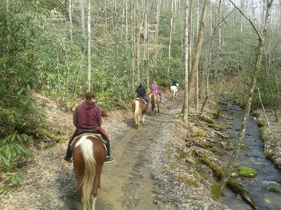 Smoky Mountain Riding Stables : beautiful scenery