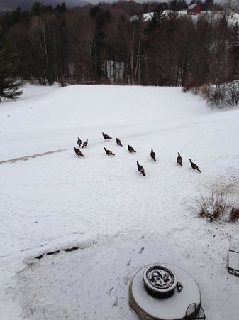 Stowehof Inn: Turkeys in the snow.
