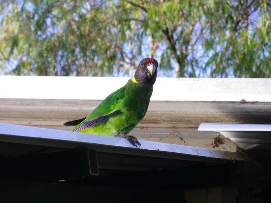 متنزه ريفرفيو للسياح: friendly parrot
