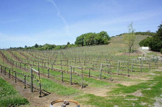 BobDog Winery: Vineyards