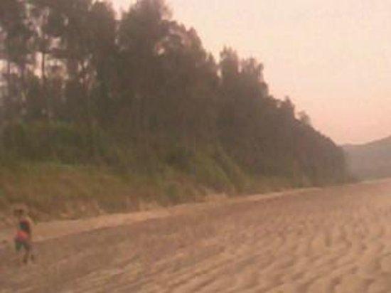 Diveagar Beach: Greenery around