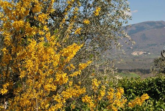 B&B Oliveto Country: Vista Pratomagno