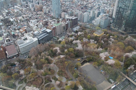 Shinjuku New City Hotel: Hotel as seen from Tokyo Govermental Building