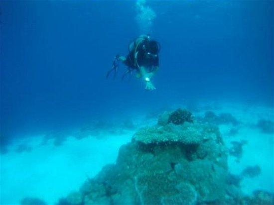 Reveries Diving Village : Scuba diving